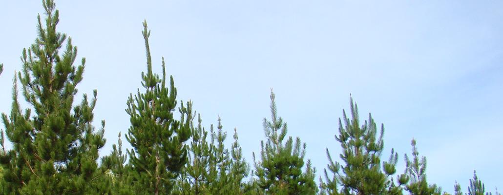 Kiwi-Lumber—Images_1040-x-400px_00922